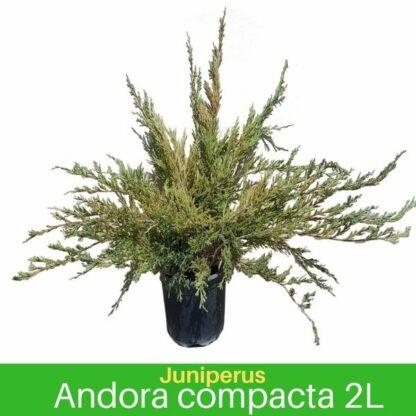 Andora Compacta 2L