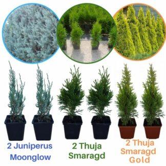 Микс 6 садници од 3 различни видови